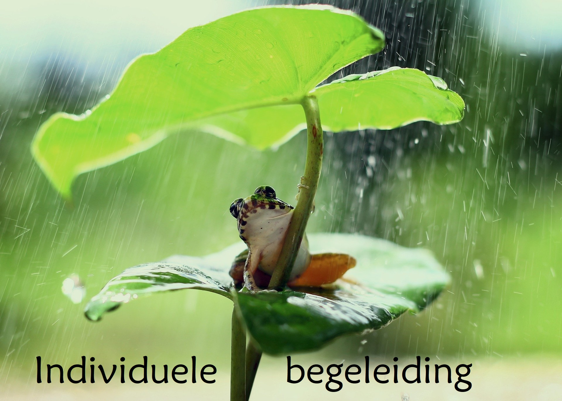 Individuele begeleiding Pure Being